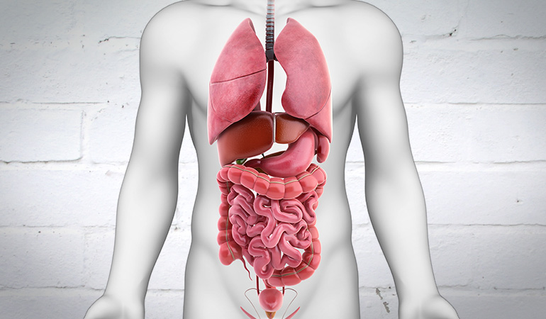 About Bowel Cancer Digestive System 770newfinal